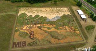 Живая картина на поле