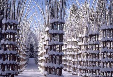 Необычный Живой Собор в снегу