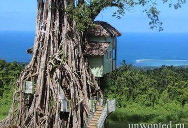 Интересные дома в деревьях Баньян