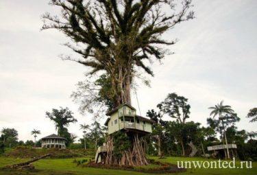 Интересные дома в деревьях - Lupe Sina Treesort