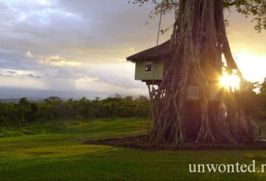 Интересные дома в деревьях в Самоа