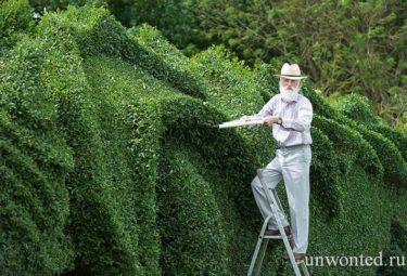 Живая изгородь - скульптура дракона