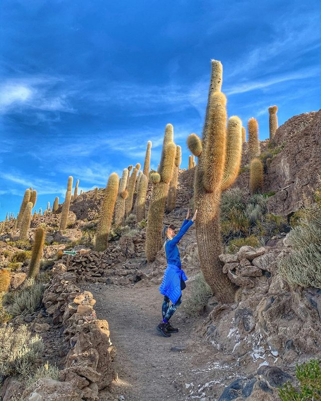 Остров гигантских кактусов Инкауаси Боливия
