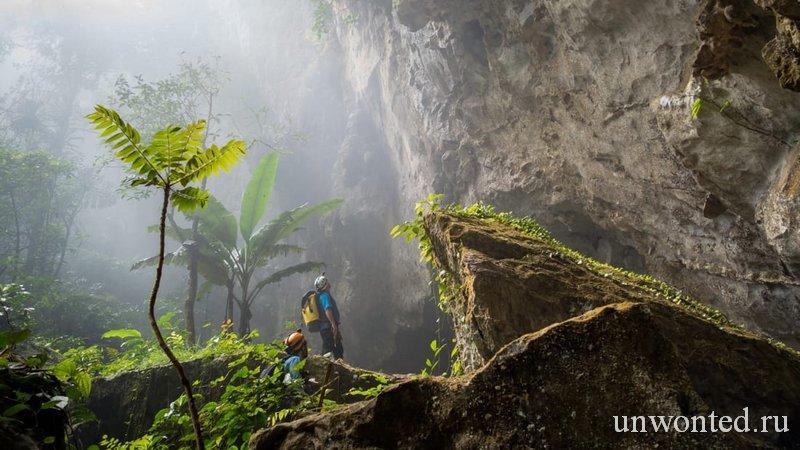 Пещера Шондонг - нетронутая экосистема