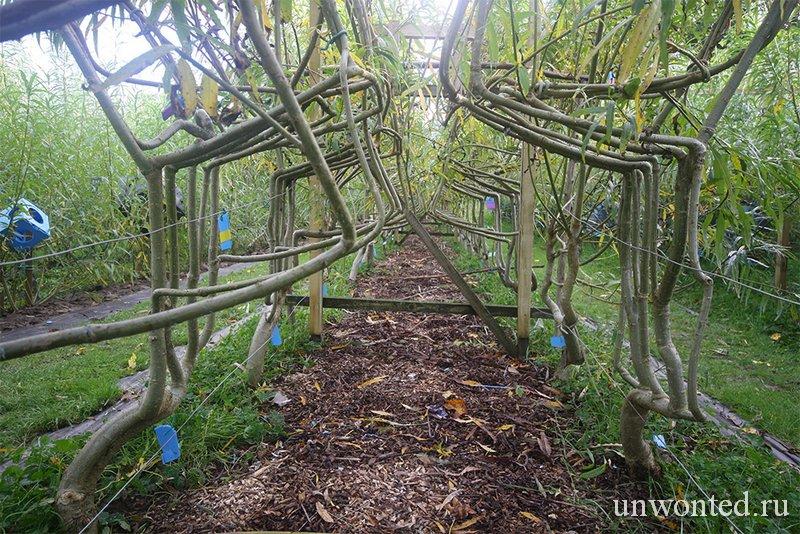 Выращенная мебель из деревьев Full Grown