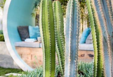 Клумба с кактусами в бетонном кольце