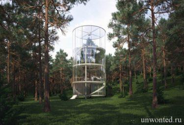 Стеклянный дом на дереве