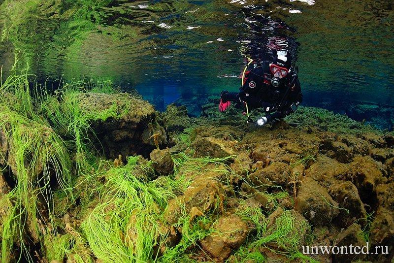 Поля зеленых водорослей Сильфра