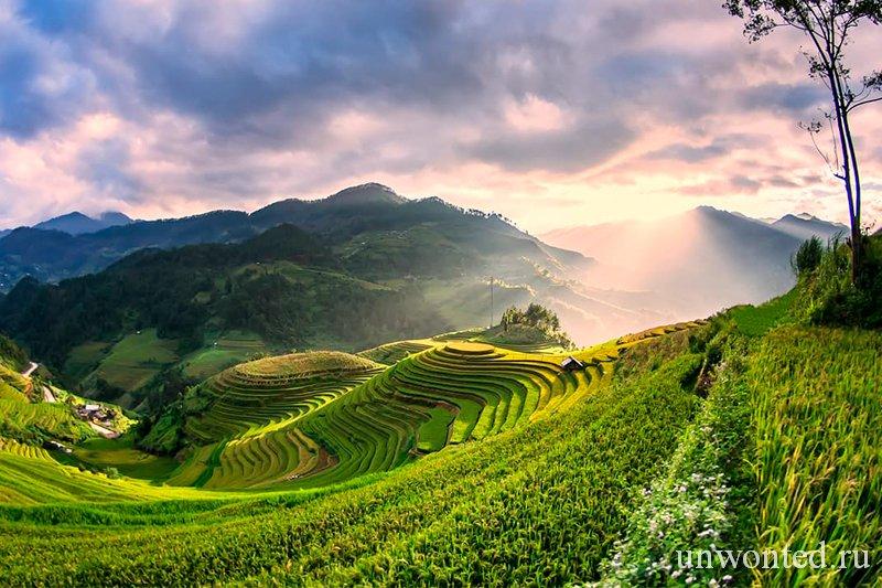 Достопримечательности Вьетнама - Рисовые террасыпа