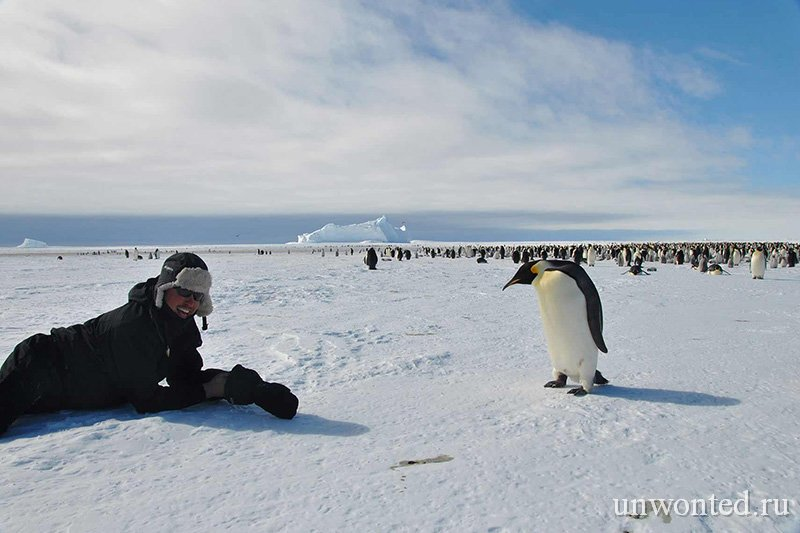 Антарктида - Императорские пингвины в бухте Атка