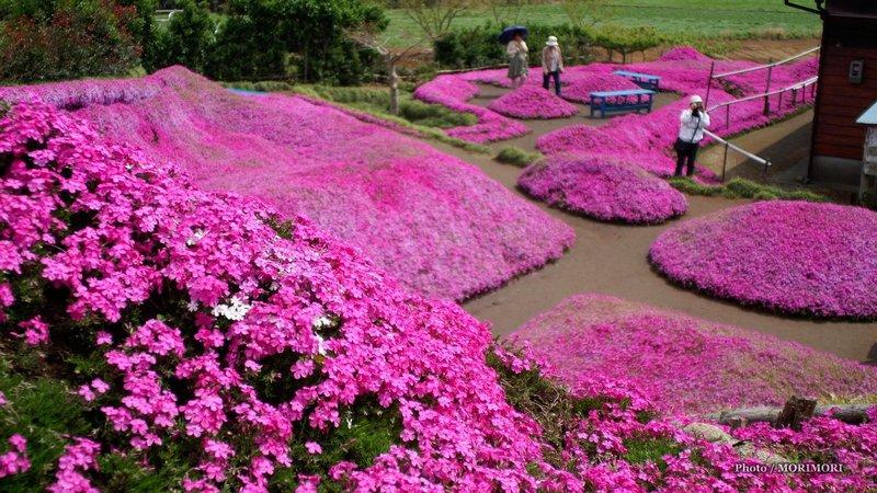 Сад Куроки Япония